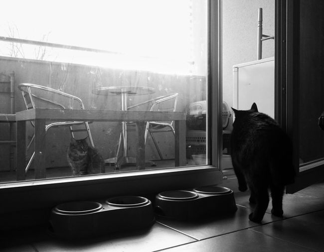 Territory War Cats Of EyeEm Blackandwhite Territory Primal Instincts