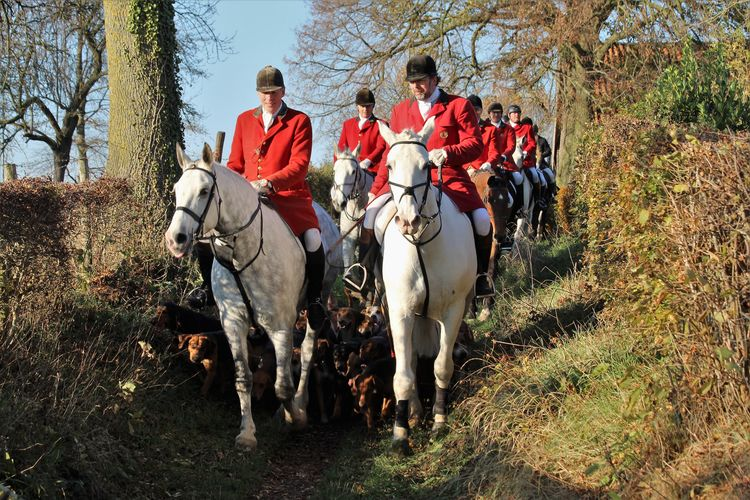 Domestic Animals Domestic Group Of Animals Group Of People Men Plant Outdoors Foxhunting See What I See Walking Around Taking Pictures Event Sport Horses Horse Draghunting Hunting Dogs Landscape Autumn colors Horserider Hunting Event Slipjacht Mheer South-limburg