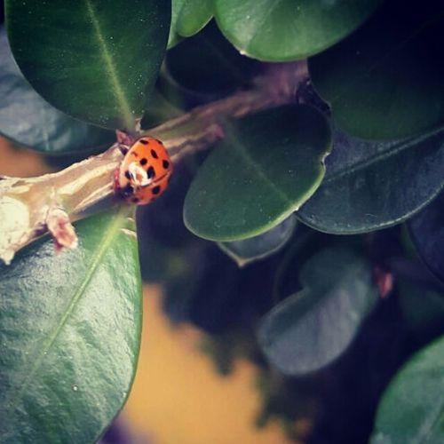 Catarina Mariquita♥ Yard Jardin
