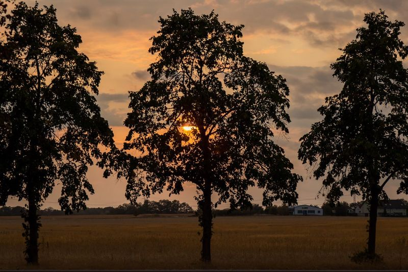 Tree Plant Sky Sunset Cloud - Sky Growth Nature Beauty In Nature Tranquility Field Silhouette Landscape Tranquil Scene Scenics - Nature No People Environment Outdoors Land Grass Non-urban Scene