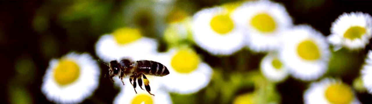 Fast bee Nature