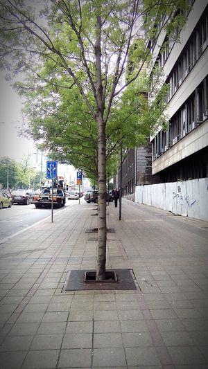 In Belgrade, Serbia Belgrade Serbia Belgrade, Serbia Queque Nature Trees Tree Tree's Queque Cars Car Street Photography Streetphotography Street Nemanjina Street Ulica Nemanjina Belgradestreets Belgrade