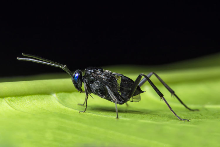 Close-up of wasp on leaf at night