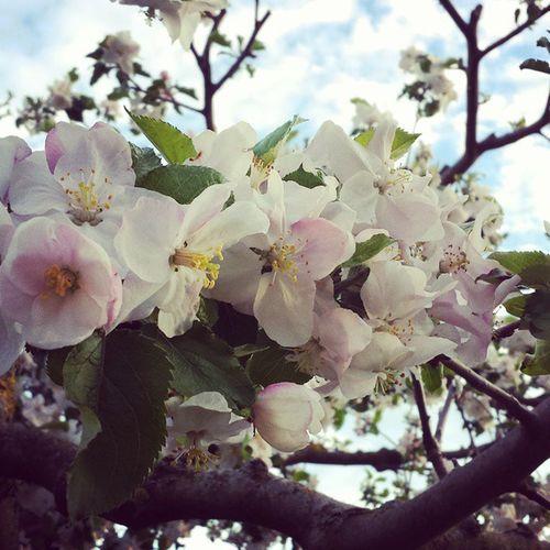Pictureoftheday HASHTAG Neuesbild Newpicture newneulikeseinfachlikeforlikel4ldamnfollowusf4fpicofthedaypotdflowerswhitenicedaysunshinedope♡ -k