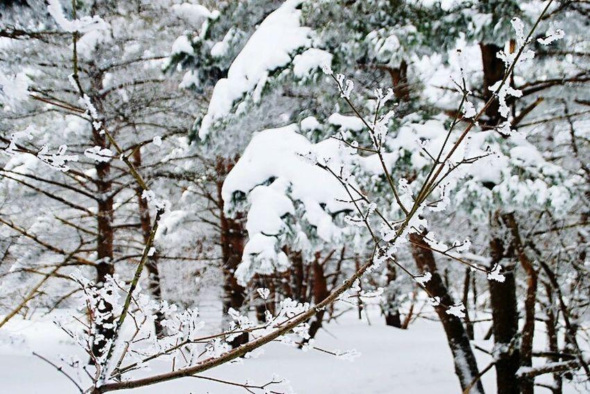 Snow ❄ Snow Tree Snowwhite Snow Photography Winterscapes Snowlandscape
