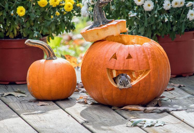Orange pumpkin on wood during autumn