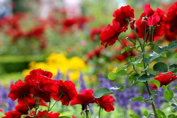 WondersOfNature Flower Collection Photography TruePassion Travelingtheworld
