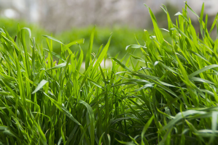 Spring Grass, Near The House, Spring, The Nature, Plants, Life, Revival