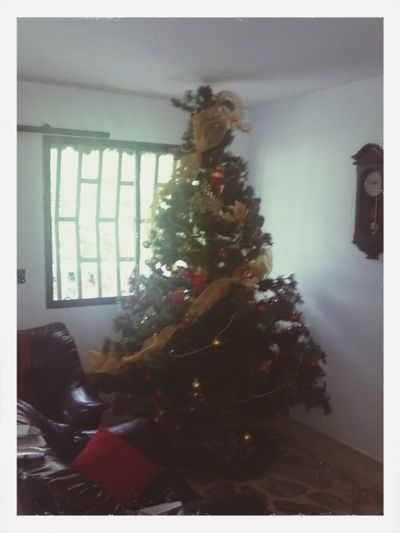 xmas tree 2,44mts Hello World