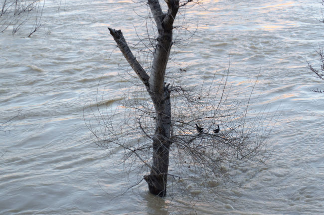 Ribera del Ebro riada final Febrero 2015 Bare Tree Day Eb Nature No People Tree Water árbol 2015  Eddl