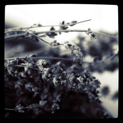 Flower Lobostudio Lobo_flowers