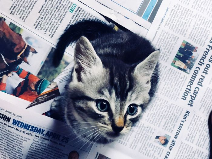Work Domestic Mammal Pets Domestic Animals Domestic Cat Paper Animal Animal Themes One Animal Cat Newspaper Indoors  Vertebrate Close-up Feline High Angle View Publication No People Book Whisker