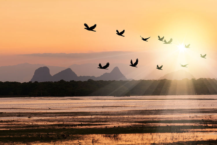 Silhouette Birds Flying Over River Against Sky During Sunset