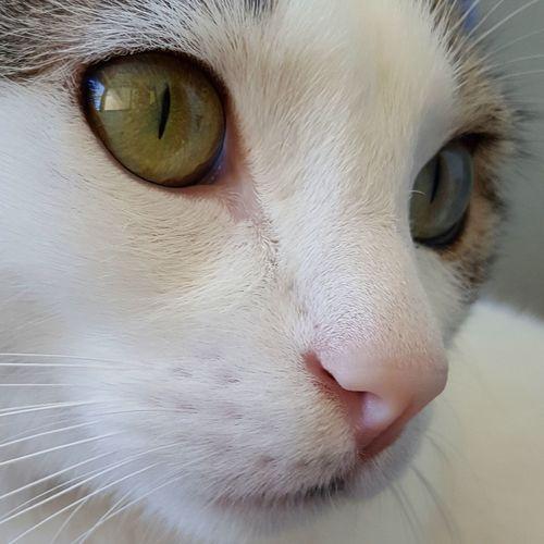 TicotheCat EyeEm Best Shots EyeEm Nature Lover Cat