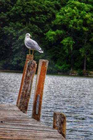 One more TGI Fence Post Friday ... A pic from a little outing this morning ... Bird Seagull Dock Post Sitting Water Irondequoit Bay