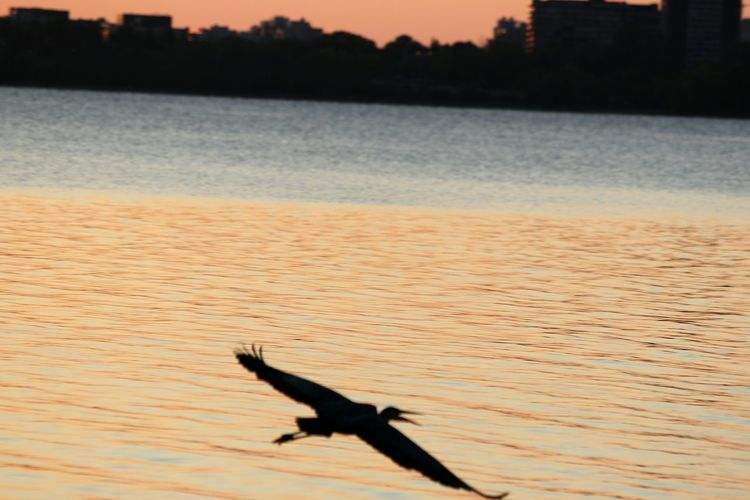 Gliding over the water