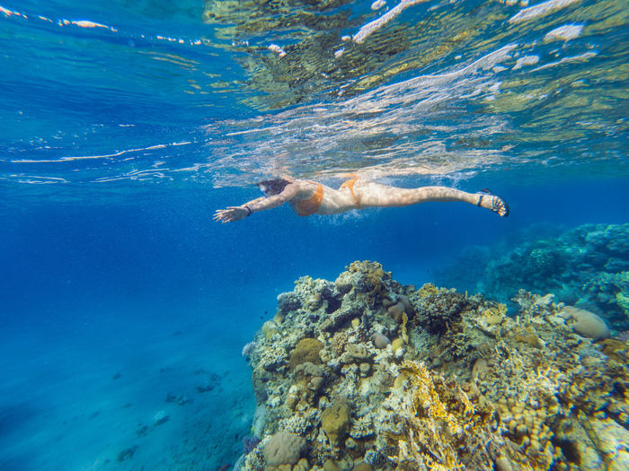 Woman snorkeling underwater above coral reef. Red sea, Eilat, Israel Exploring Females Red Sea Diving Snorkeling Summer Vacation Swimming UnderSea Underwater World Woman Blue Water Coral Coral Reef Fish Nature Ocean Red Sea Sea Sea Life Sexygirl Snorkel Swimming UnderSea Underwater underwater photography Water