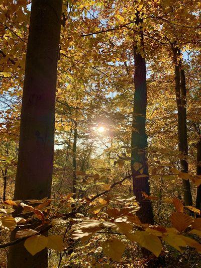 Sunlight streaming through tree during autumn