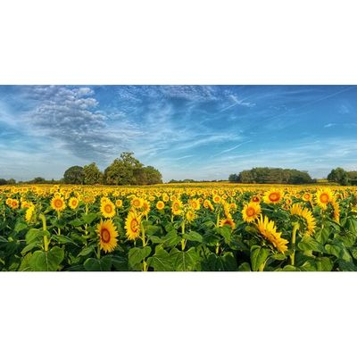 Ksbucketlist HDR Androidography Photography @grinterfarms thanksamillion kansas