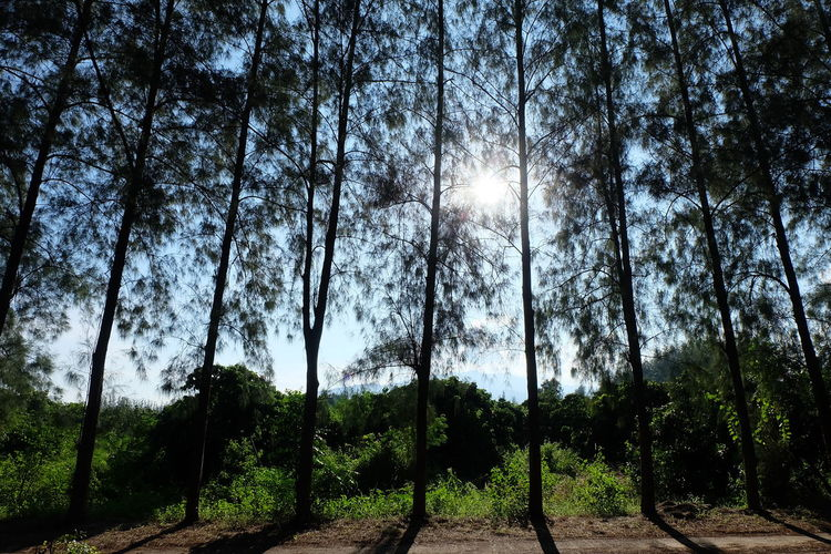 Tree Plant Land Tranquility Forest Growth Nature Beauty In Nature Sunlight Tranquil Scene Sky Day No People Non-urban Scene Environment Landscape Scenics - Nature Direction Green Color The Way Forward WoodLand Outdoors Sun
