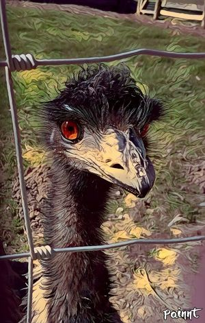 One Animal Animal Themes Bird Close-up Beak Emu Eye Wire Fence Birds_collection Bird In Captivity Pupil EyeEm Nature Lover Shame