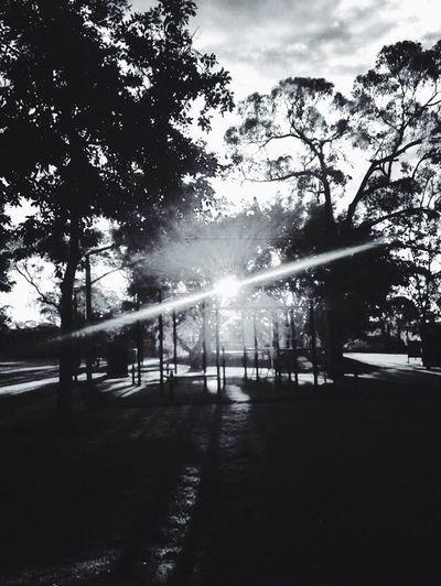 Blackandwhite Sunlight Tree Tranquil Scene Nature Outdoors Streaming