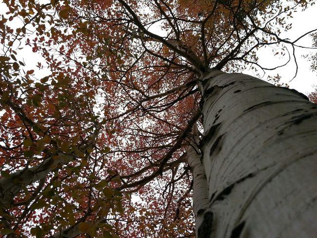 TreePorn The Purist (no Edit, No Filter)