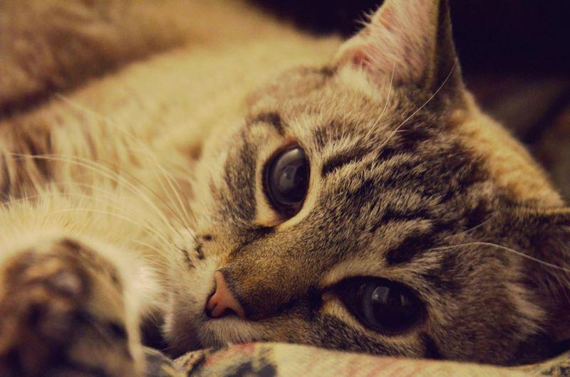 любимый котяра ...кося