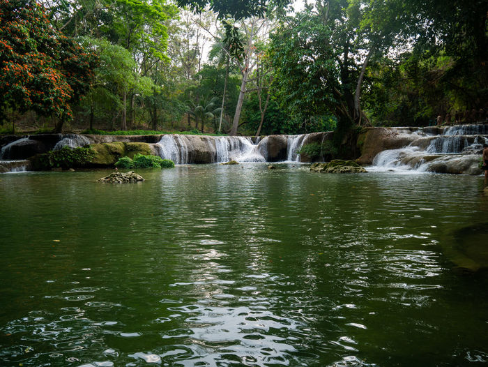 Scenic view of river flowing in forest