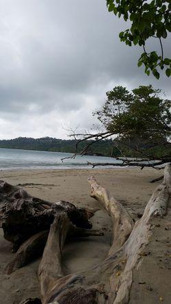 Costarica Costa Rica Manuel Antonio Outdoor Pictures Outdoor Photography