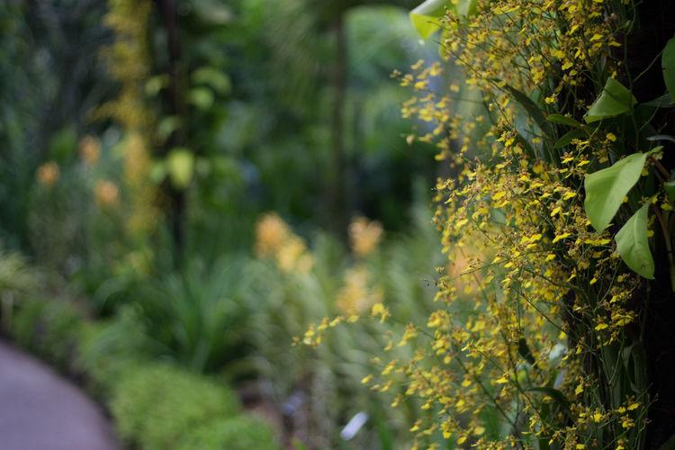 Close-up of flower tree