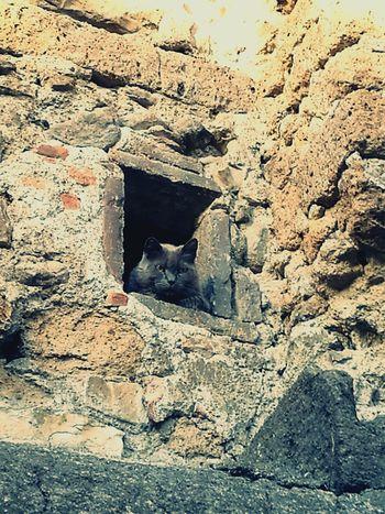Cat Curiosity Ancient Town