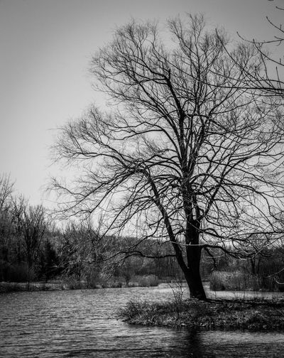 Nikon Black And White Blackandwhite Bnw Picoftheday Nature Photography Lake Photography Tree Plant Sky Nature Beauty In Nature Day Environment Outdoors Branch Tranquility Scenics - Nature No People Clear Sky Water Land