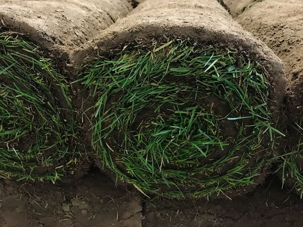 Turf Working Freshness No People High Angle View Day Outdoors Nature Plant Growth Freshness Rolled Sod SOD Grass Greensward Stack Agriculture Earth Laying Grass Bale Bale  Gardening Garden Soil Close-up