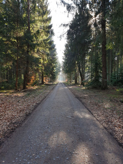 WoodLand Treelined Outdoors vanishing point Forest The Way Forward Diminishing Perspective Direction Tree Tranquil Scene Road Path Forest Photography Forestwalk Take A Walk Mixed Forest Wood Woods In The Woods Retreat Tree Trees Tree Area Serenity Forest Path