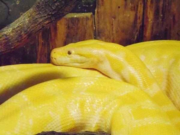 Snake Snake ♥ Snakesofinstagram Snake! Photos Around You Animal Love Animal_collection Photo Animals In The Wild Animal Photography Photo♡ Iphoneonly IPhoneography Photoshop Photo Of The Day Photoshoot