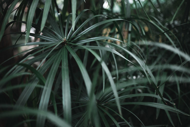 Dark green moody colored plant and foliage