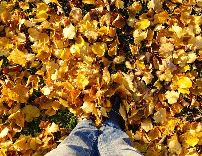 31.October 2015 enjoy the last October day (3) Eye4photography  October Eyem Best Shots Tadaa Community