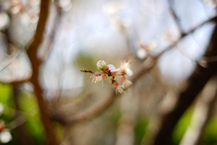 散景 虚化 日常 花花草草 Flowers Spring Routine Life Hello World Enjoying Life Relaxing 福伦达 Bokeh Bokehlicious Bokeh Photography 盘山 蓟县 早春