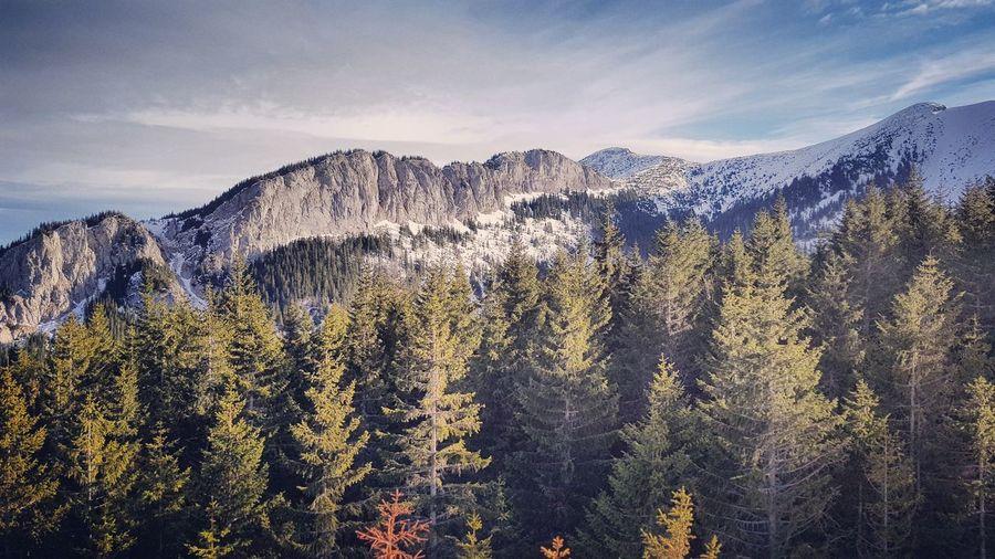 EyeEm Selects Tree Mountain Pine Tree Sky Landscape Pine Woodland Evergreen Tree Forest Fire Ski Jacket WoodLand Mountain Ridge Rocky Mountains Mountain Peak Snowcapped Mountain Mountain Range Rock Formation Scenics