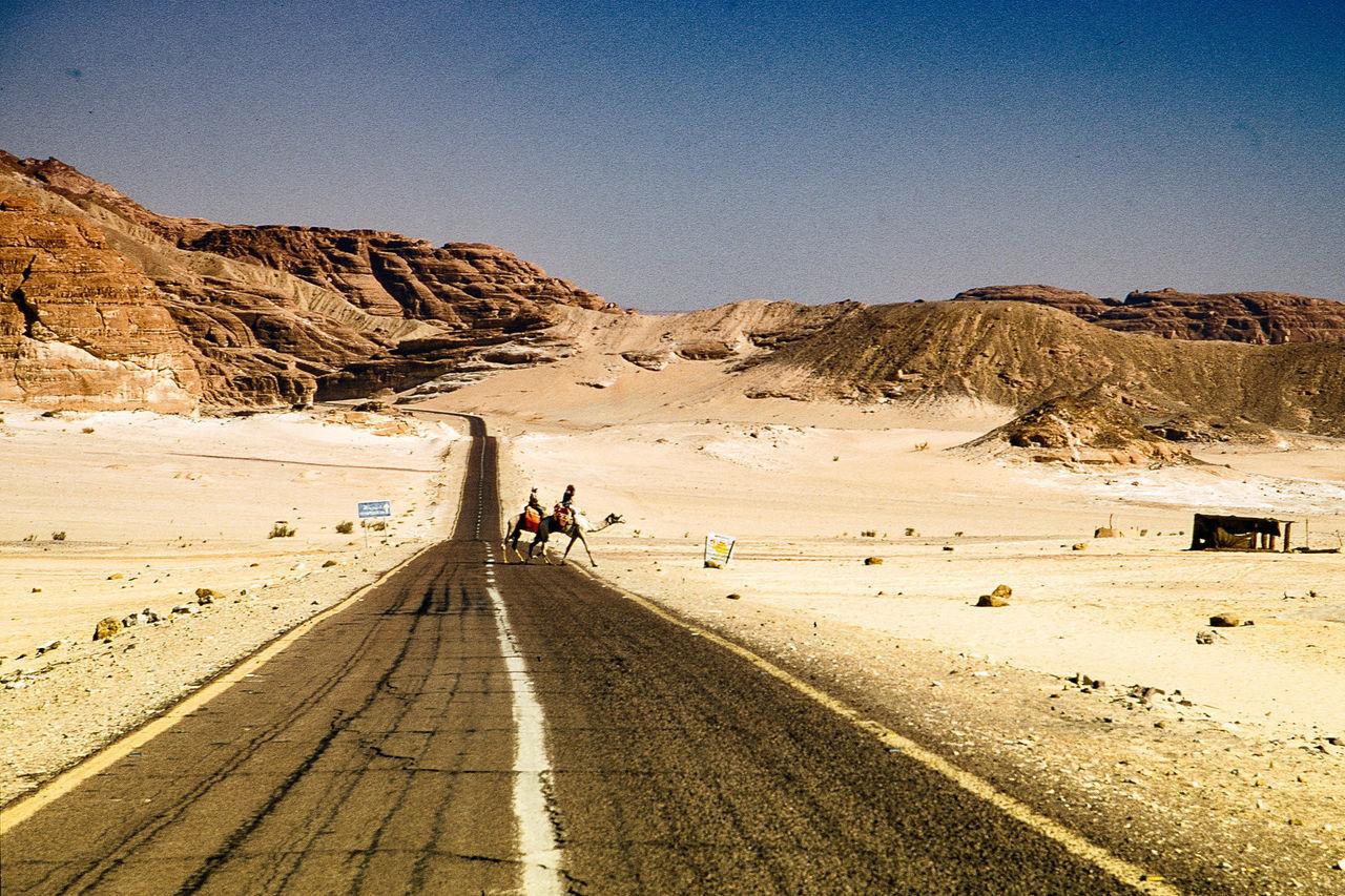 Camels Crossing Road At Desert