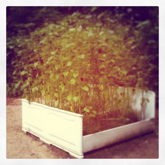 Back to Nature - ein Korn im Feldbett Nature
