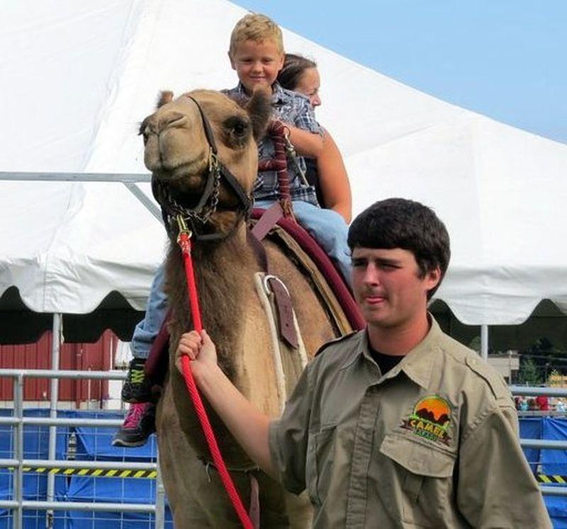My Nephew Camel Riding Northwest Washington Fair Summer Time