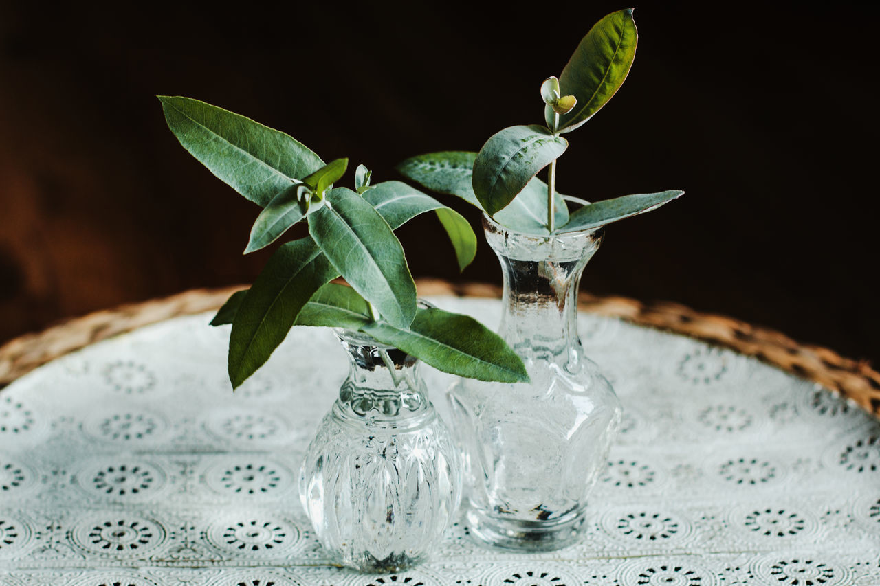 Close-up of eucalyptus leaves in glass vase on table
