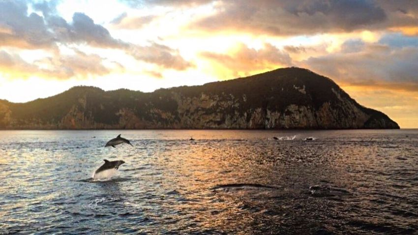 Travel Photography Dolphins Nature Animals In The Wild Beauty In Nature Sea Life Beautiful Travel New Zealand Photography Scenics Dreaming Free The Great Outdoors - 2017 EyeEm Awards EyeEm Nature Lover EyeEmNewHere