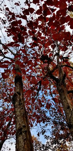 Tree Tree Trunk Low Angle View Growth Branch Day Nature No People Outdoors Beauty In Nature Sky Perspectives On Nature Beauty In Nature Landscape Nature Frommypointofview Fall Collection Leaf Plant Photography