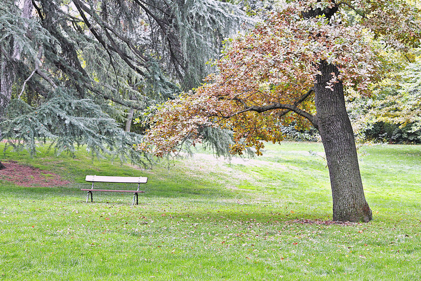 Banco en el parque del capricho Plant Tree Tree Trunk Trunk Grass Seat Beauty In Nature Bench Nature Tranquility Scenics - Nature Park Park - Man Made Space Day Tranquil Scene Field Park Bench Cherry Blossom Cherry Tree No People Autumn Autumn colors Leaves