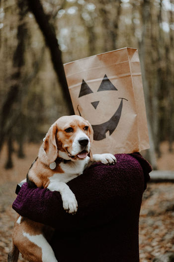 Dog looking at camera in a halloween story