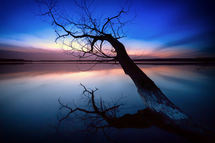 Berlin Sunset_collection Tree Bare Tree Beauty In Nature Branch Day Dead Plant Dead Tree Dried Plant Horizon Over Water Lake Lone Nature No People Outdoors Scenics Silhouette Sky Sunset Tranquil Scene Tranquility Tree Tree Trunk Water