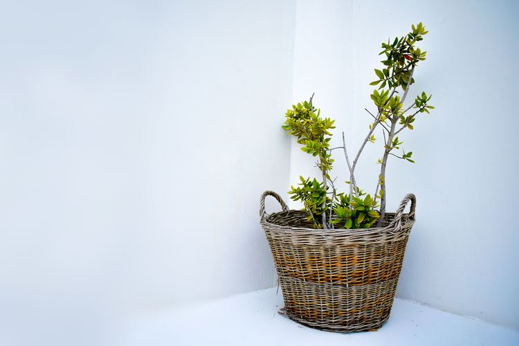 Potted plant in basket against wall